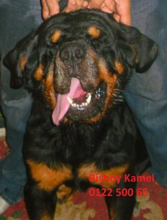 Male Rott For Matting for A Hot price