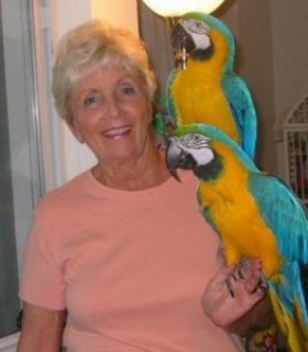 Well Tamed Beautiful Blue and Gold Macaws For re homing