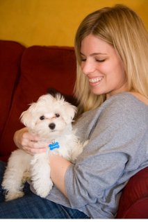 Wow Wow Teacup Maltese puppies for adoption	2