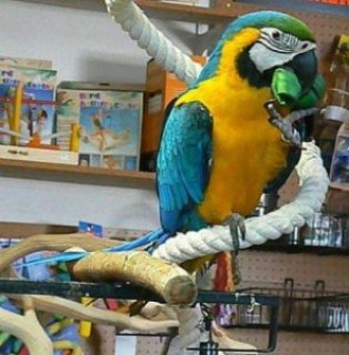 Macaw parrots for adoption now with Cagesde