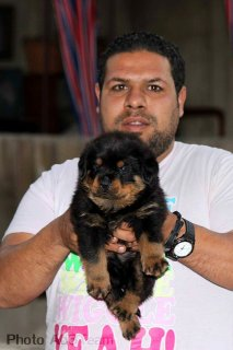 صور Super Rott Puppies 2