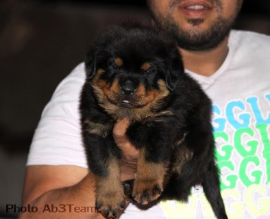 صور $Super Rott Puppies 3
