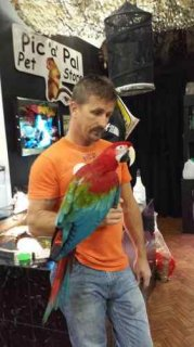 Parrots are tame,  And very