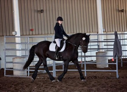 AMAZING AND ENERGETIC FRIESIANT HORSE FOR SALE...77