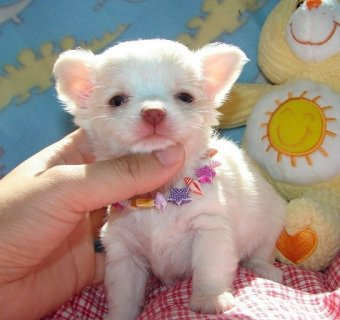 both male and female puppies for adoption