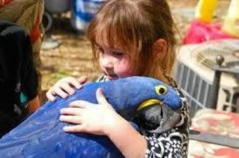 Beautiful and Talking Hyacinth Macaw Parrots for Sale.