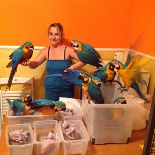 Healthy Blue and Gold Macaws