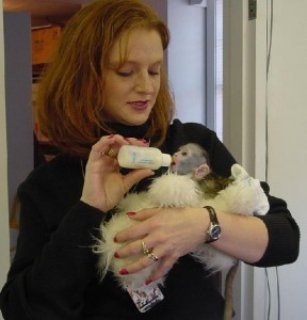 Tamed Capuchin Monkeys