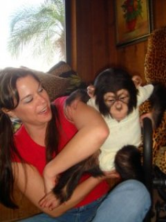 The Ultimate Home Raised Baby Chimpanzee Available