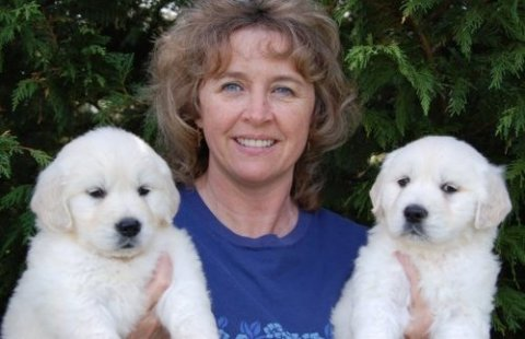 Adoption.I have three Golden Retriever Puppies puppies for re-ho