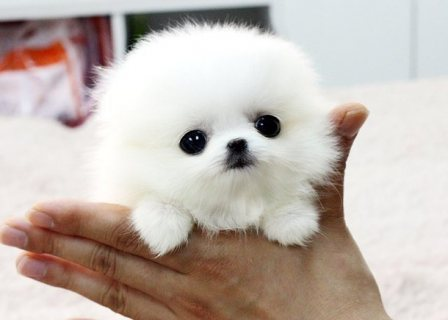cute looking puppy for sale