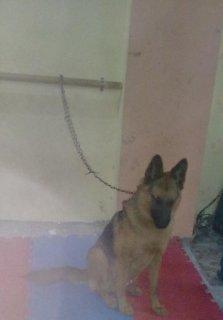 .......... كلب بلاك جيرمن الوان حمرا وش مقفول .......