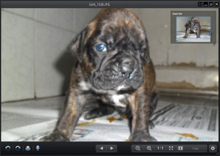 boxer puppies 4 sale