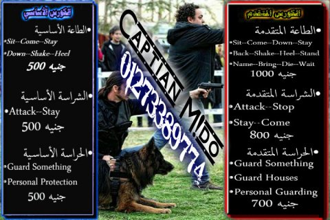 ♠♣♦Best Dogs Training In Alexandria♠♣♦