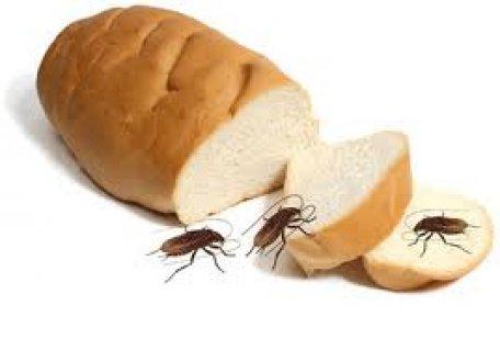 الوقايه من الحشرات 19035|الوقايه من الفئران19035الوقايه من الزوا