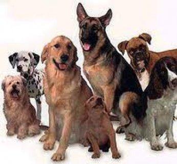 جميع انوااااااااع الكلاب نوفرها لك