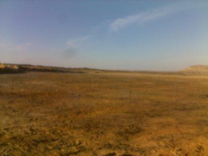 45 فدان أرض زراعية بالواحات البحرية