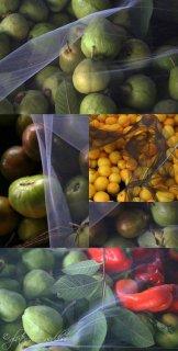 للتصدير لجميع انحاء العالم اجود انواع الخضار والفاكهة