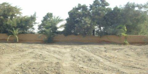 للايجار مزرعة15 فدا بها كهرباء ماء بلبيس الشرقية بسعر مغري سنويا