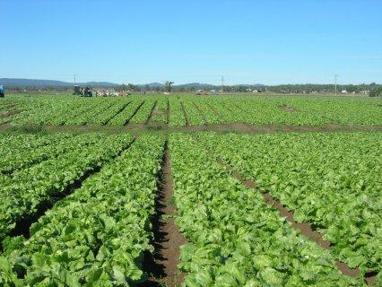 أمتلك مزرعتك 5 فدان بوادى النطرون بملكية نهائية مسجلة أدفع 15000