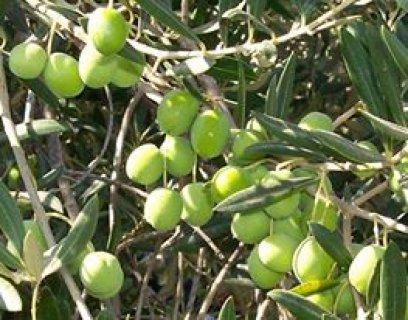 امتلك مزرعة 2,5 فدان مزروعة فاكهة