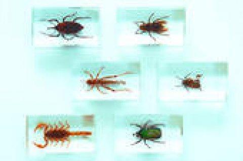 الشركة المصرية لمكافحة الحشرات والقوارض