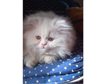 قطة هاف بيكى (باربى)