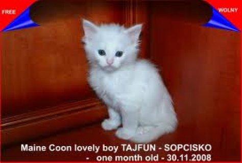 قطة موون فيس  ولا اروع