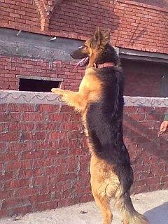 كلب جدا ممتاز