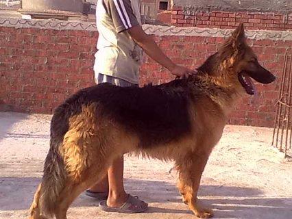 كلب جميل جدا