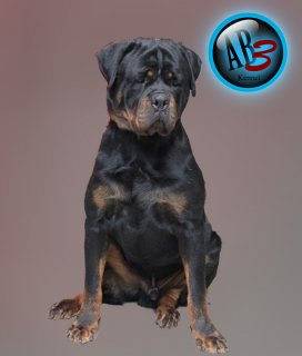 "For ""Ben\"" Our new imported male ............. up for matting"