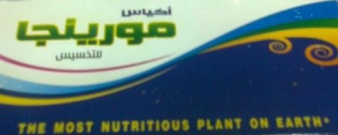 شاي المورينجا للتخسيس الوكيل الحصري