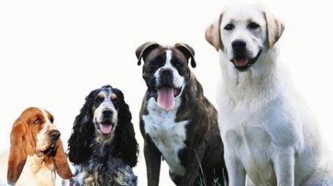 توافر جميع انواع الكلاب بجميع الاعمار