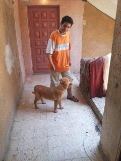 كلبة جولدن  5شهور