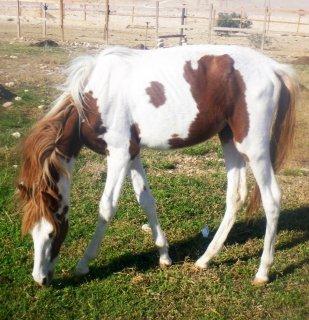 مزرعة خيول بتصفى أخر 5 خيول باسعار خياليه