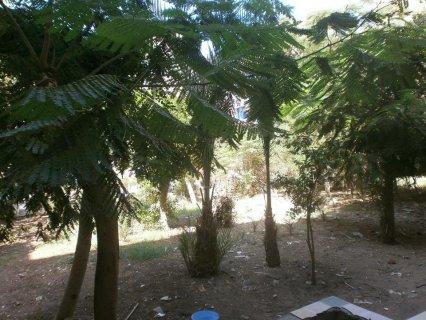 شقة 65م للبيع بمصطفى النحاس مدينة نصر