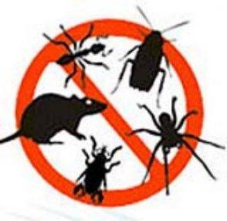 شركة أمنك لخدمات مكافحة الحشرات و القوارض