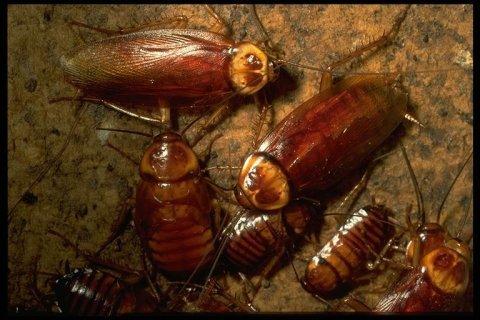 شركة رش (الندى لمكافحة الحشرات والقوارض )