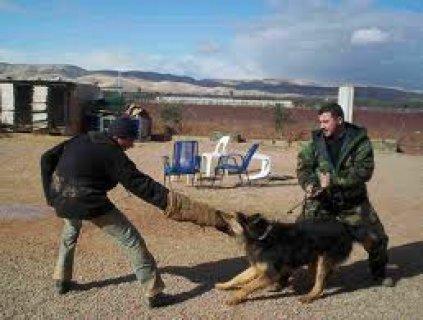 تدريب الكلاب معانا شي مختلف جدا مدربين محترفين والتزام بالوقت