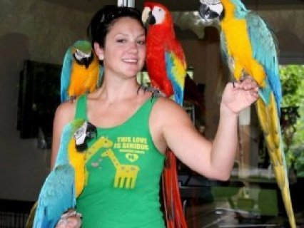 Scarlet Macaws That Can Talk