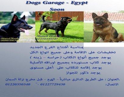 مزرعة كلاب : Dogs Garage