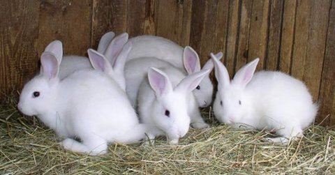 More Rabbits for Sale!
