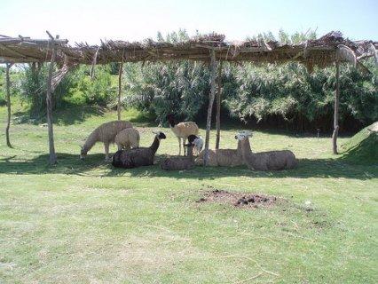 رحلة خامس يوم عيد الاضحى الى افريكانو و مطعم قدوره بالاسكندريه
