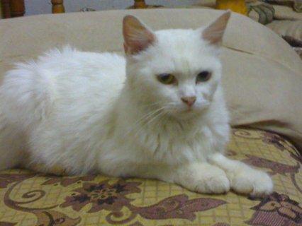قطط للبيع فى القاهرة بسعر مغرى جدا ويوجد جميع انواع القطط