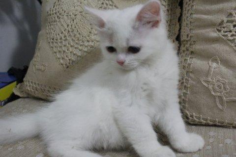 قطط باسعار مغريه جدا الحق اتصل