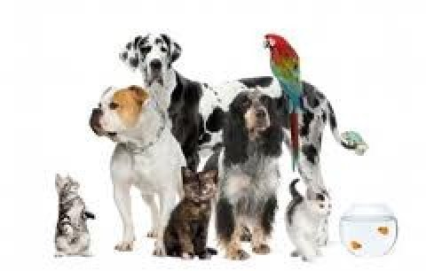 Give your pets the best home training in just one week by our be