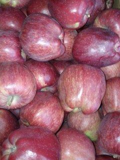 لدينا تفاح امريكى