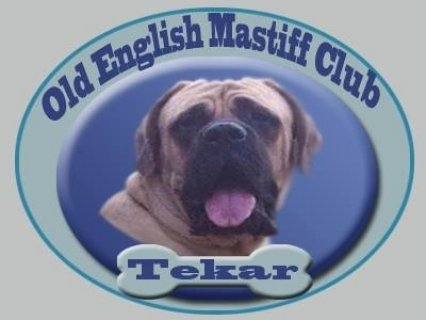 Old english mastiff for mating