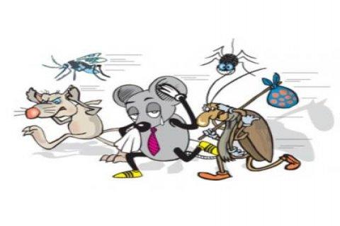 شركة أمنك لمكافحة الحشرات والآفات