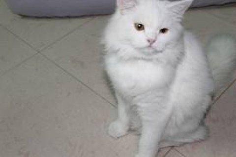يوجد قطط بسعر مغرى جدا ويوجد قطط تبداء من 80 ج بس